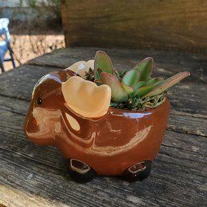 Succulent Plant in Moose Pot, Animal Planter